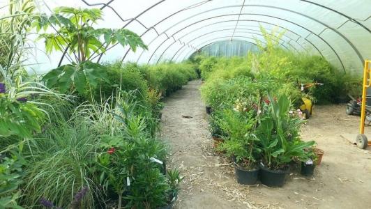 Einsicht in eines unserer Bambusbaum Gewächshäuser