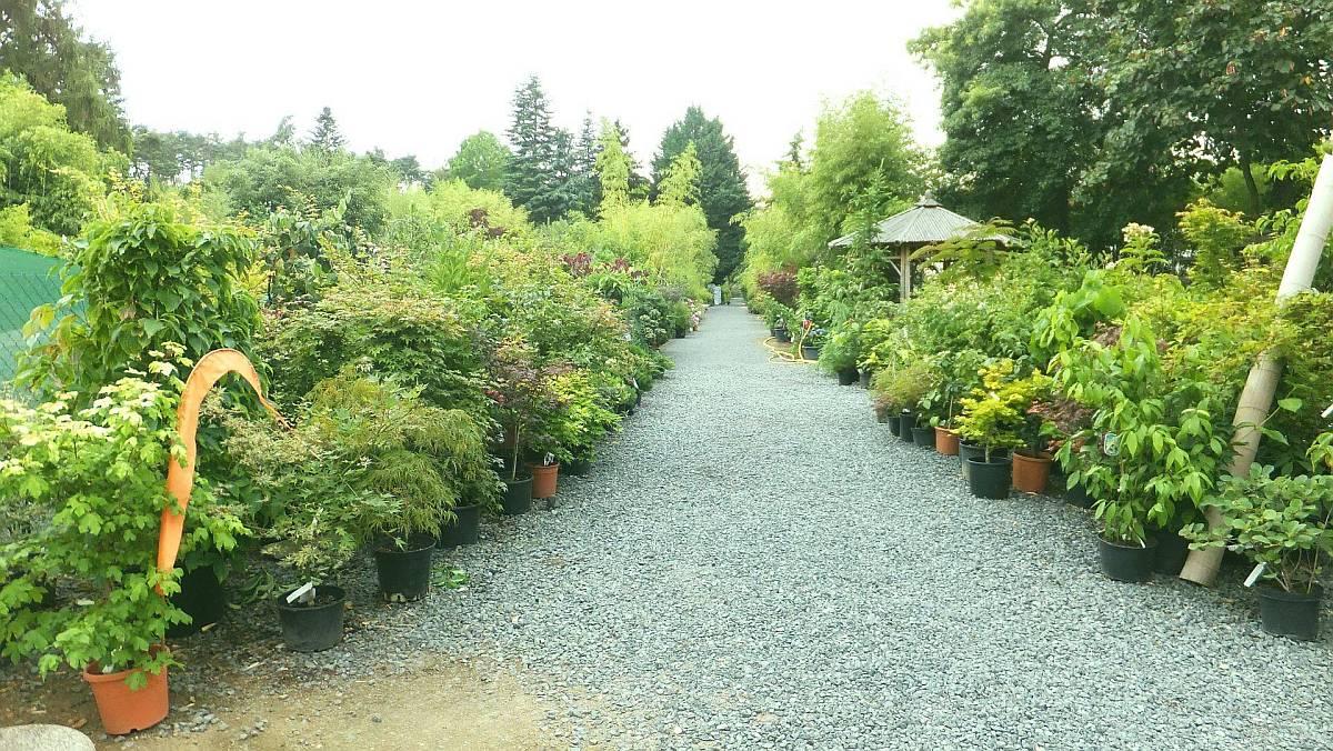 Unser Hauptweg in die Bambus-Baumschule